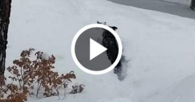 Dog Needs A Little Help After Massive Dumping Of Snow